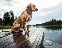 Retriever: Dog days of summer
