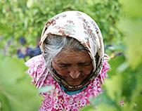 vineyard | türkiye | urla | 14