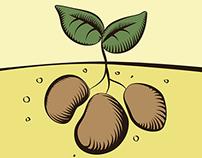 Solanum - visual identity