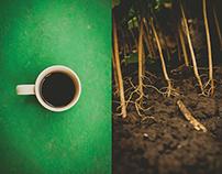 El café, la plantación y la taza.