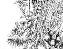 Botanical Illustration Series