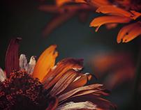 Farben des Herbstes.