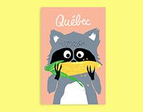 Québec – Raton laveur / Raccoon