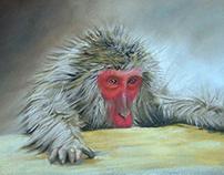 Hot Tub Monkey, chalk pastel on board