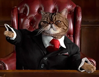 Affinity Federal Credit Union - Fat Cats