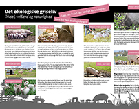Article layout idea - happy pigs :-)