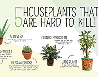 Infographic – Easy Houseplant Guide