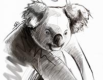 Endangered animals #2 : Koala