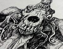 Coyote Skull Illustration