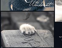 Wandercat Branding image
