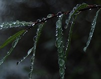 Drops