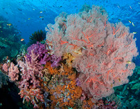 Magical Underwater World of Raja Ampat