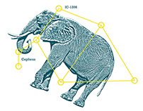 Elephant's Trunk / Exercise