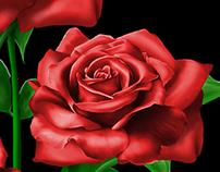 Rose flower- Digital painting