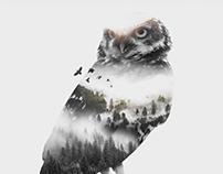 Ruru - Owl Double Exposure Design