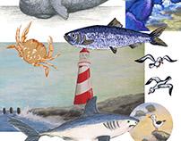 dieren in de Noordzee