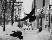 Crow, City