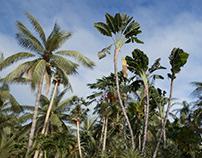 Palm/Corona Render