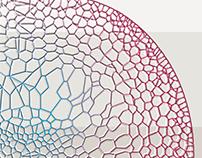 Bryophyta/Class Musci - cell's inspiration