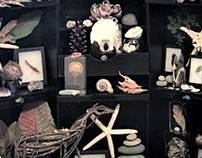 Cabinet of Curiosities - Personal Collection
