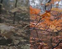 Color Grading of ZiffernBlatt