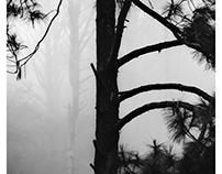 Mountain Province - Fog & Trees