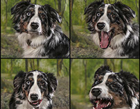 Expression of a dog