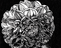 SMALL BEAUTIES Pen and ink Drawing
