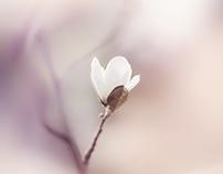 № floral