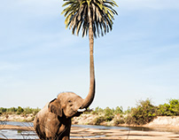 PALM-TREELEPHANT