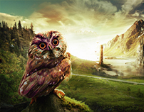 Owl kingdom