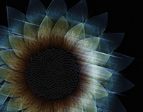 Birth of a Virtual Sunflower