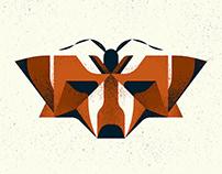 Moth Mimicry