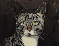 Kalle, the cat