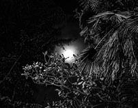 The Last Moon