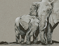 Wildlife illustration series