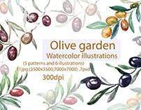 Olive garden Watercolor illustrations