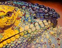 Colored pencil Illustrations