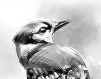 Blue Jay Bird in Photoshop