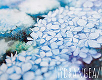 Hortensia in blue