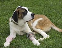 Arthroscopic Surgery for Dogs