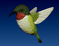 Hummingbird Model