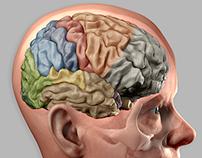De hersenen I / Het limbische systeem