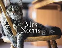 Mrs Norris | Branding | Packaging | Web Design