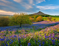Blubells @ Roseberry Topping