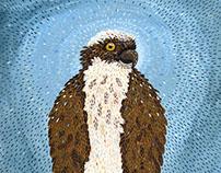 Cougar Bay Osprey