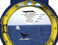 BMT Whale Wheel