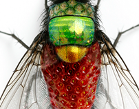 Photoshop: Fruit Fly