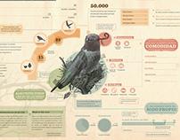 Infografia Pichones de Mama