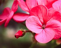 Wonderful Flowers Photography